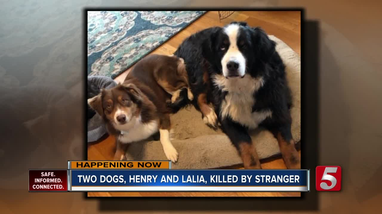 Suspect who shot two dogs in Sumner County arrested