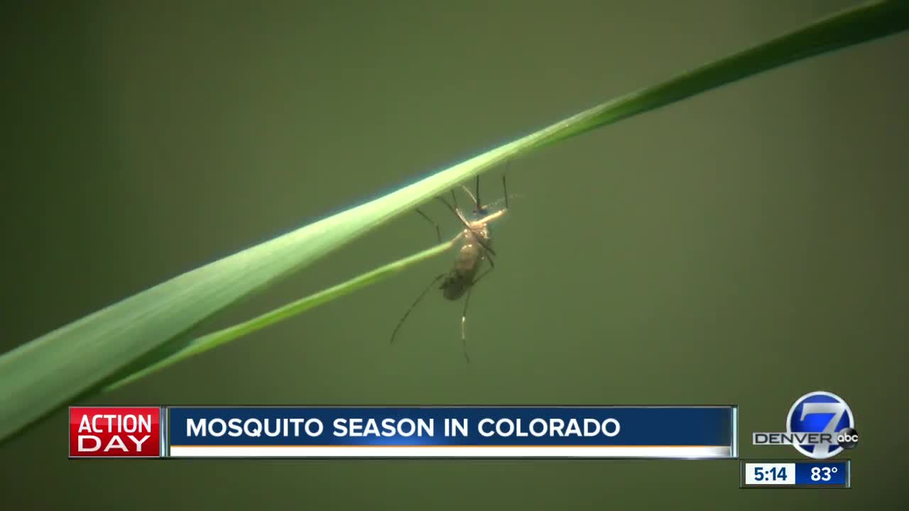 Health Officials Urge Precautions Against Mosquitoes Due To West Nile Virus Activity