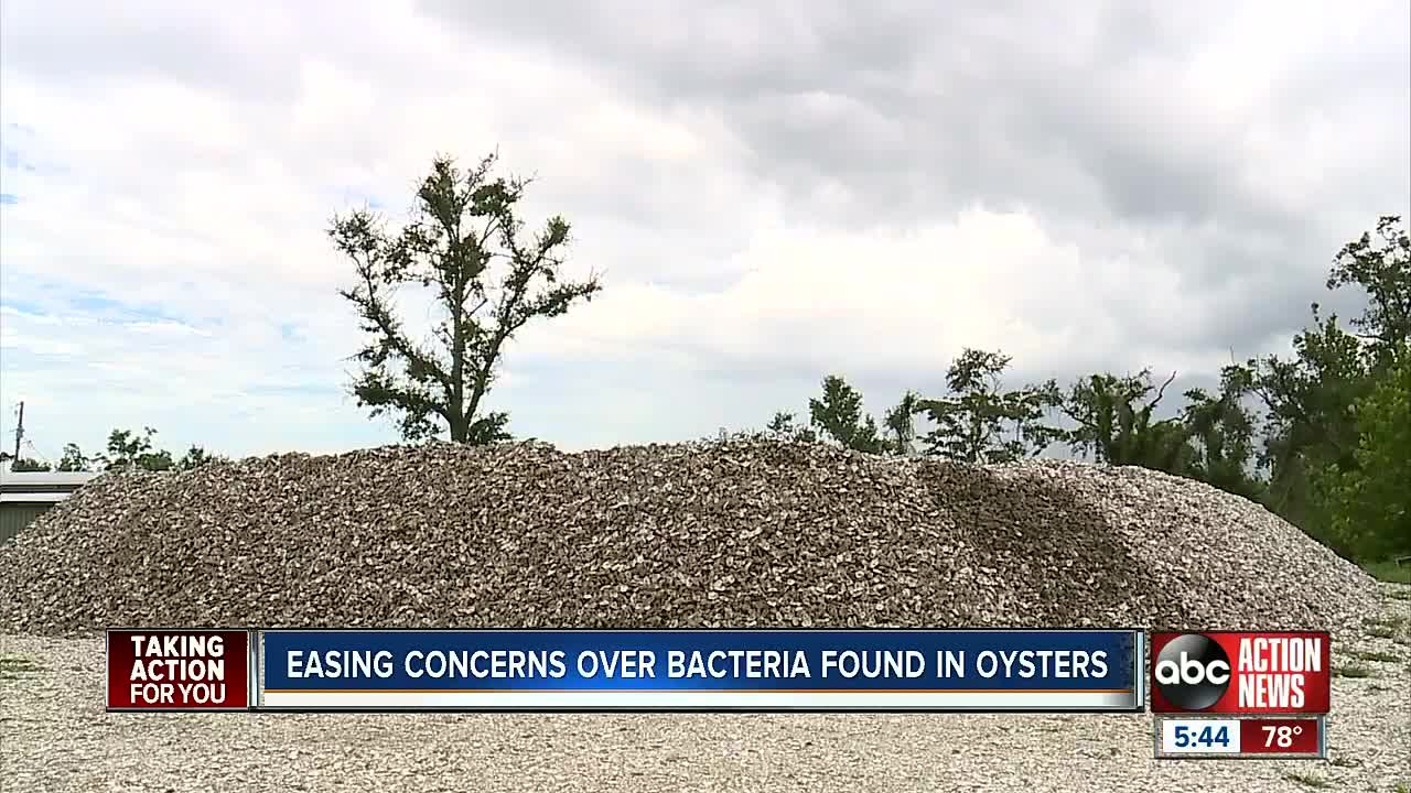 Florida oysters face double whammy with bacteria worries and