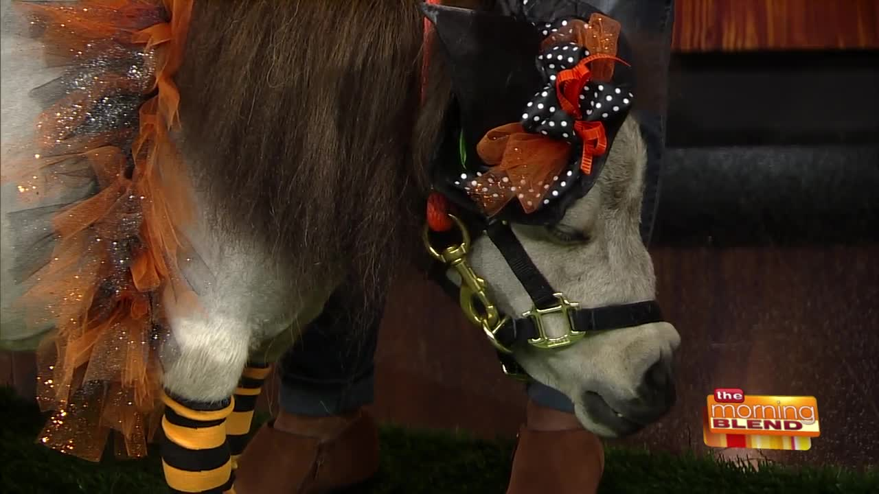 Pixie The Mini Horse Returns To The Blend