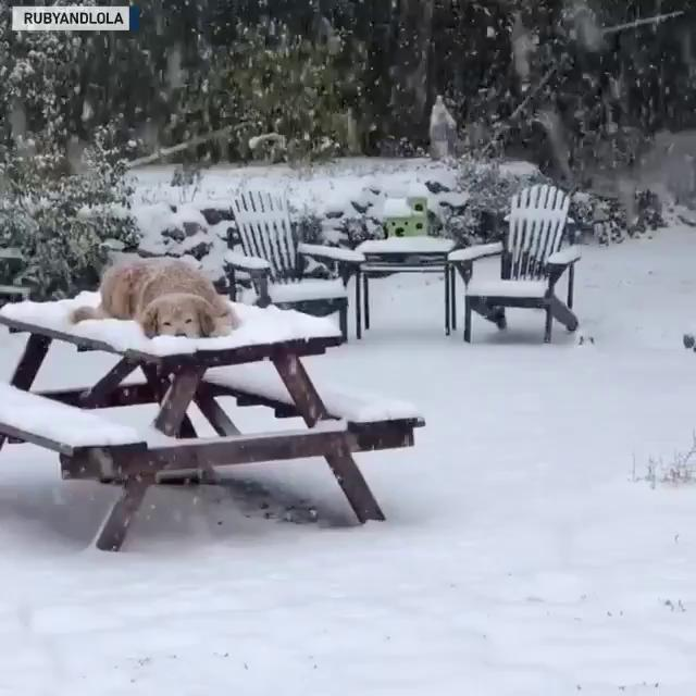 Dogs enjoy snow in Colorado