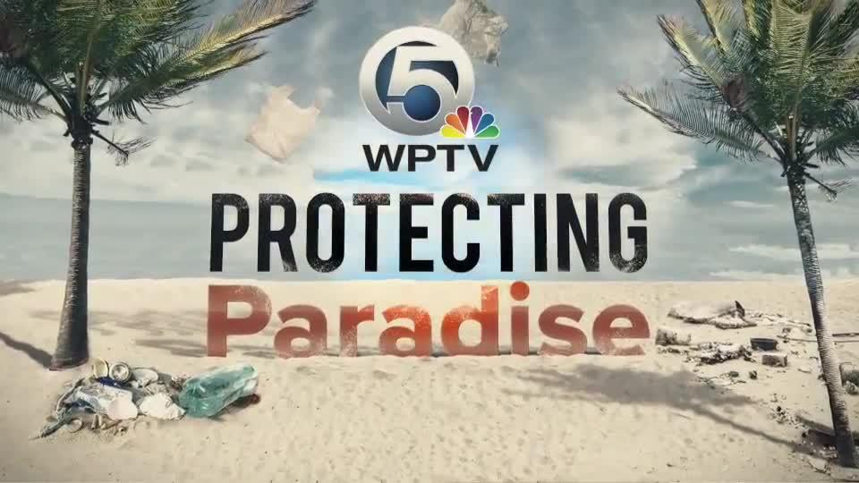 Protecting Paradise   WPTV - TV   WPTV com