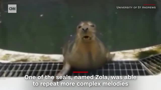 Seals have been taught to sing the 'Star Wars' theme tune