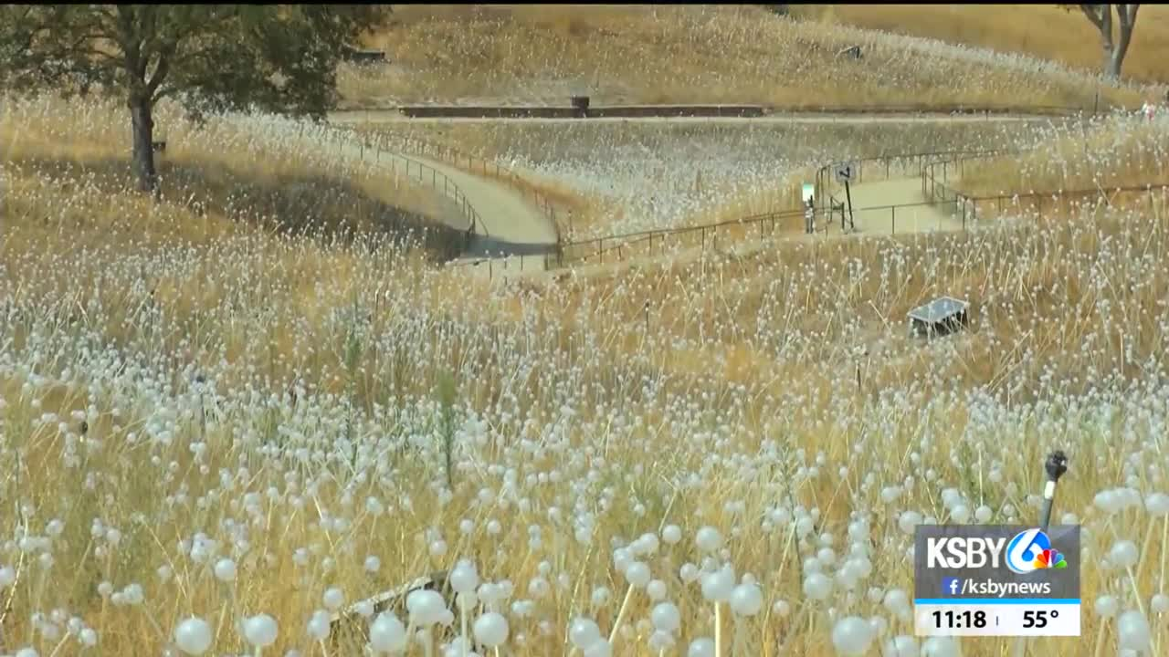 Field of Light at Sensorio in Paso Robles holding event to support Central Coast charities