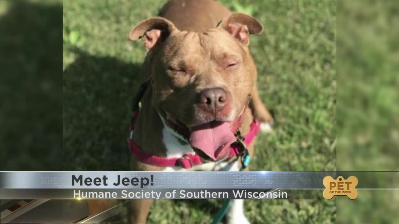 Pet Of The Week Meet Jeep