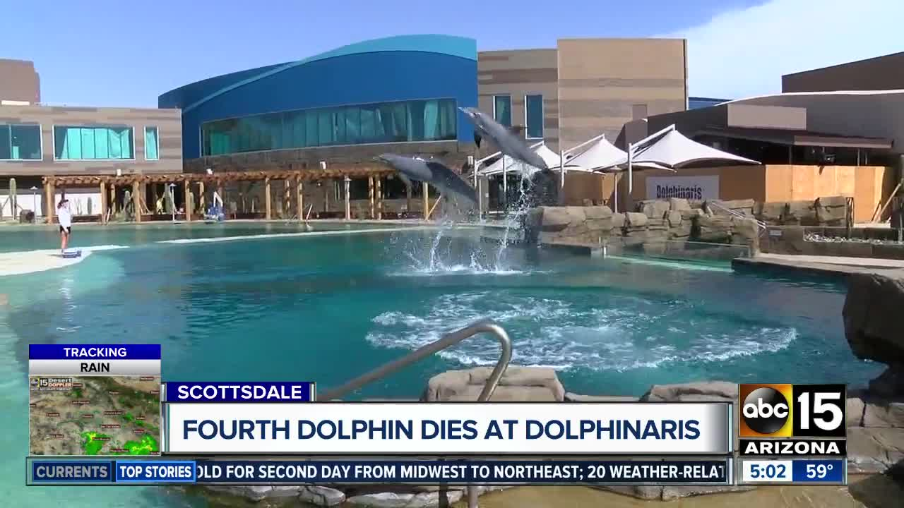 40d9b7424049dd ... Dolphinaris spoke to ABC15 about their concerns about the facilities  filtration systems following the fourth death of a dolphin in the past two  years.