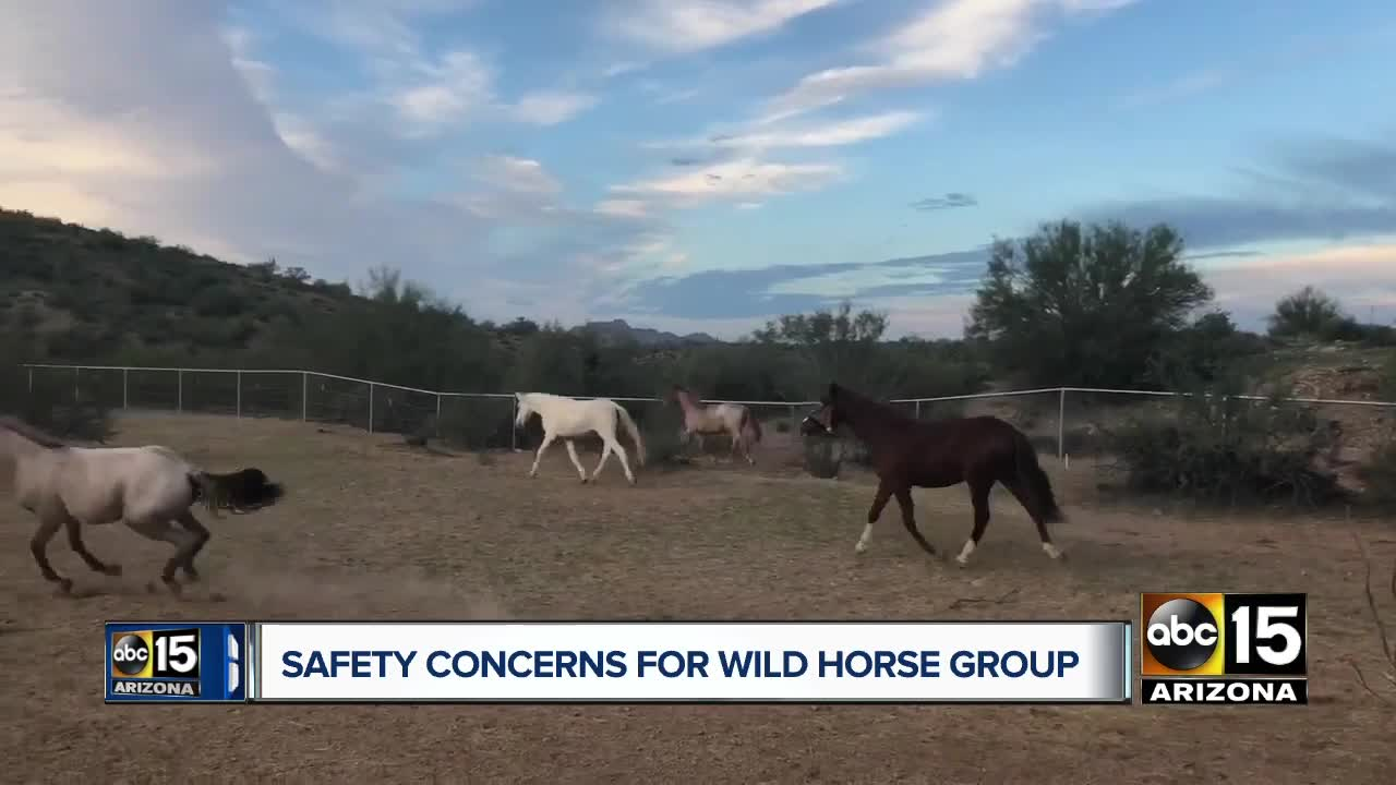Who is killing Heber wild horses? Filly orphaned after