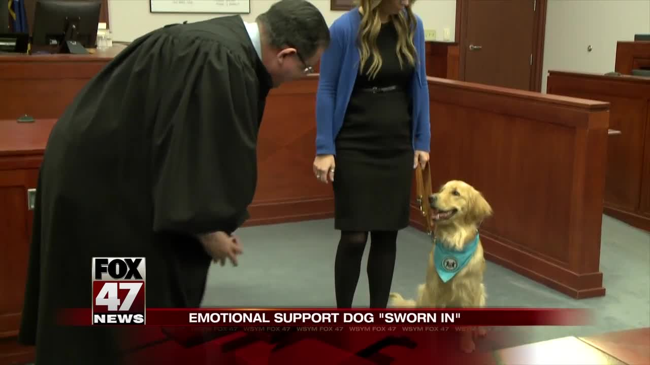Delta The Newest Employee Of The Ingham County Prosecutors Office Was Sworn In On Wednesday Usa Service Animal Registration Kory The Emotional Support Dog Sworn In