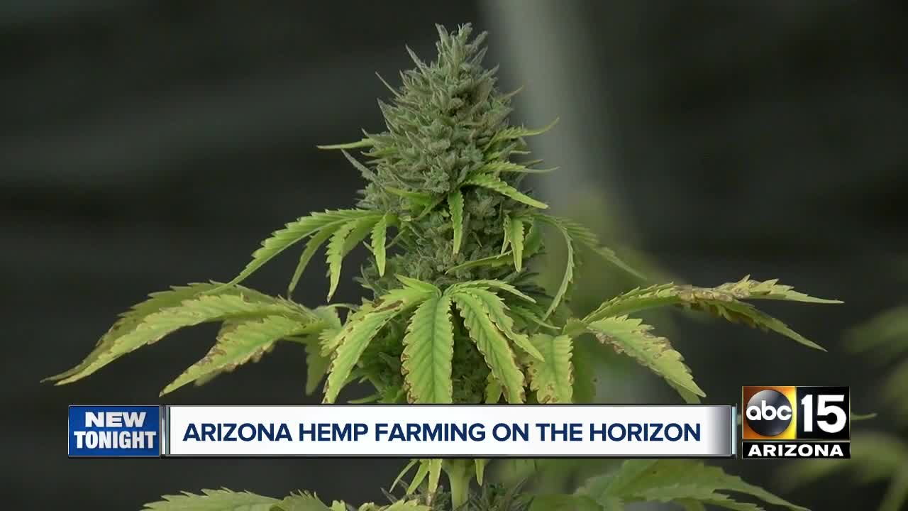 Arizona's next cash crop? Lawmaker pushes for rush on hemp bill